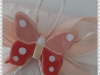 Farfalla calamita 2